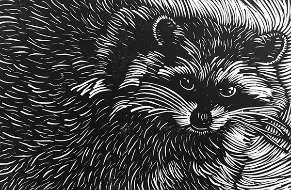 Andrea Tishman, Admire the Raccoon, at Waltham Open Studios 2020